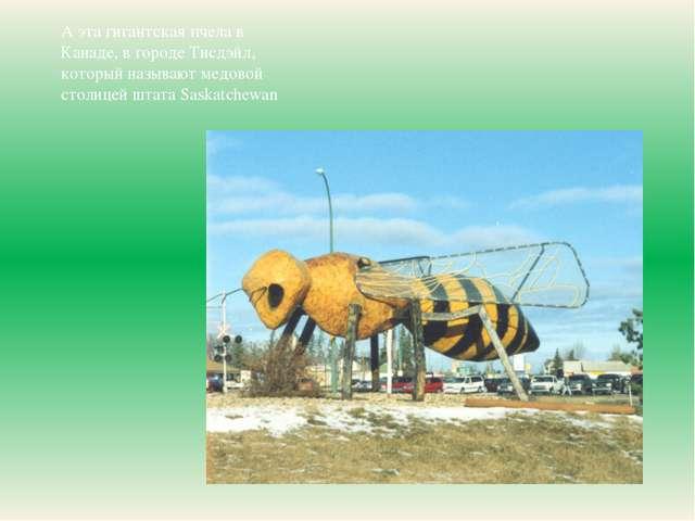 А эта гигантская пчела в Канаде, в городе Тисдэйл, который называют медовой с...