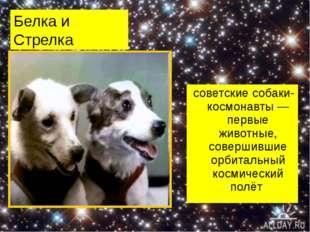 Белка и Стрелка советские собаки-космонавты— первые животные, совершившие ор
