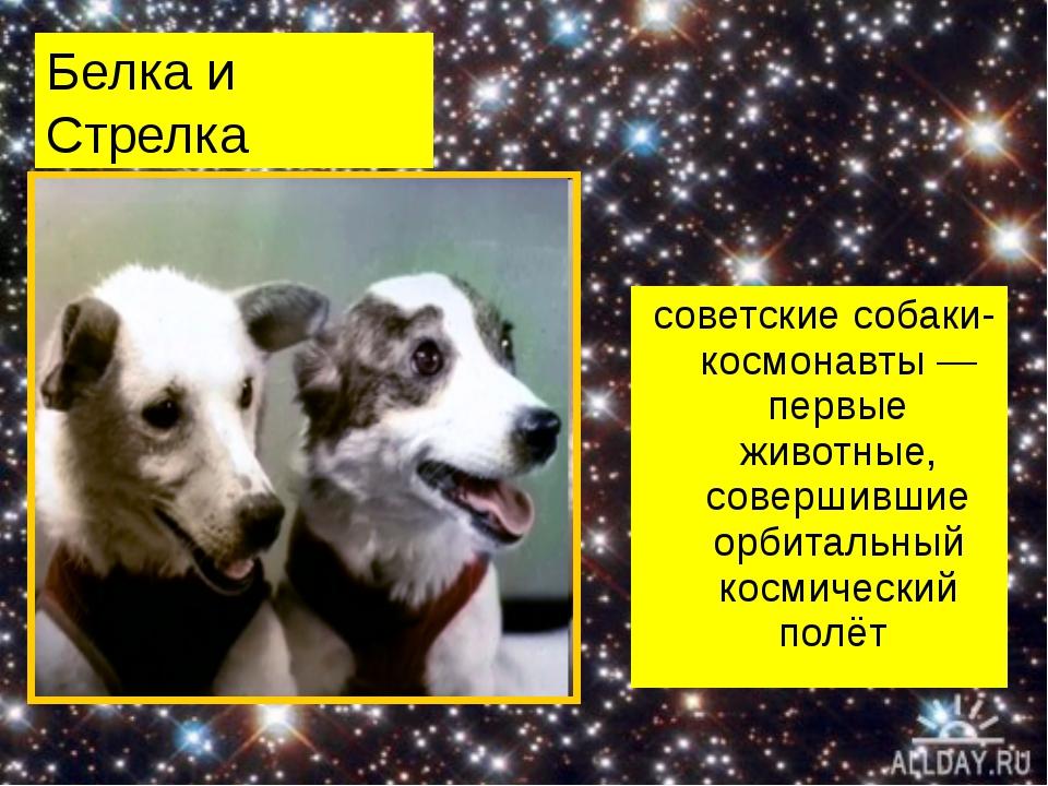 Белка и Стрелка советские собаки-космонавты— первые животные, совершившие ор...