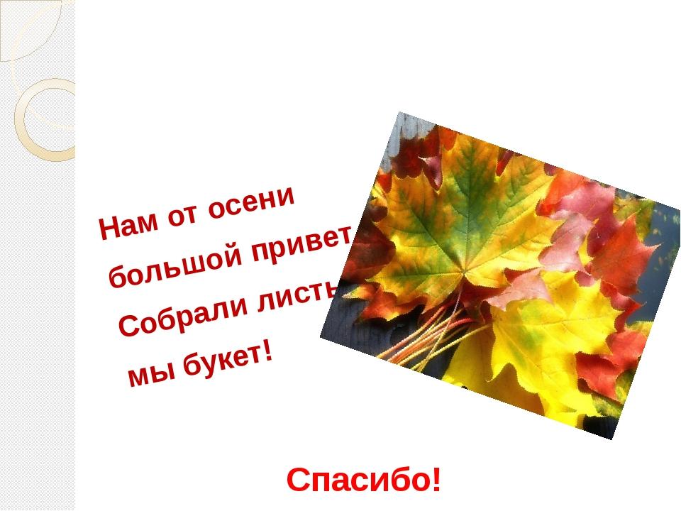 Нам от осени большой привет – Собрали листьев мы букет! Спасибо!
