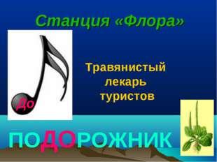 До Станция «Флора» ПОДОРОЖНИК Травянистый лекарь туристов