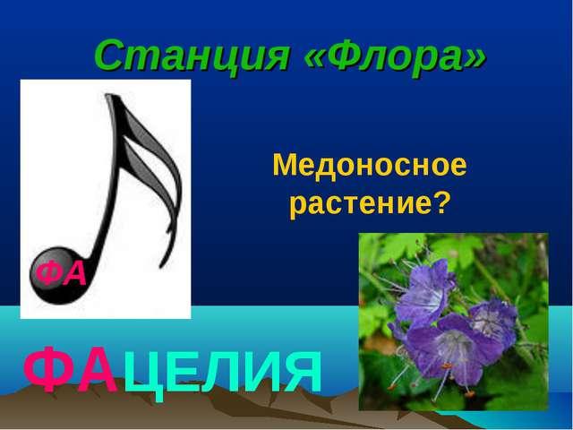 ФА Станция «Флора» ФАЦЕЛИЯ Медоносное растение?