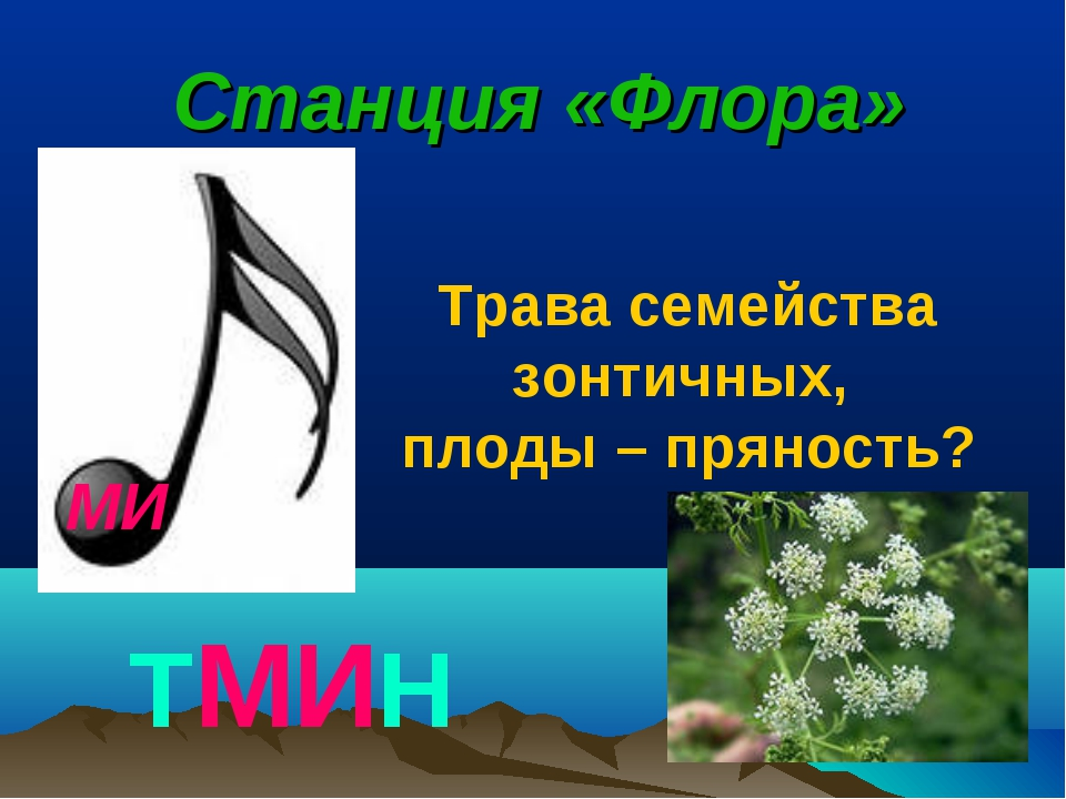 МИ Станция «Флора» ТМИН Трава семейства зонтичных, плоды – пряность?