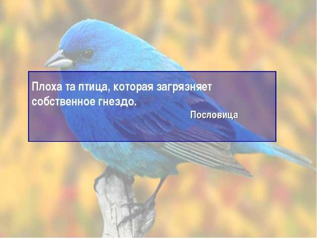 Плоха та птица, которая загрязняет собственное гнездо. Пословица