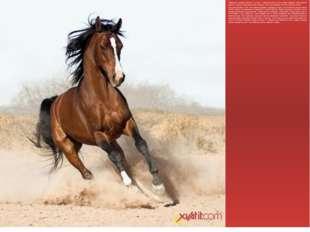 Наверняка, каждому известно, что кони – главная ценность всех кочевых народов