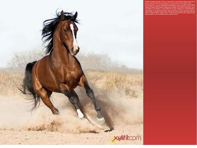 Наверняка, каждому известно, что кони – главная ценность всех кочевых народов...