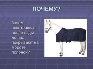ПОЧЕМУ? Зачем вспотевшую после езды лошадь покрывают на морозе попоной?