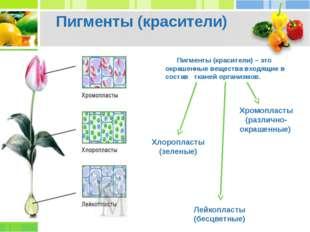 Пигменты (красители) – это окрашенные вещества входящие в состав тканей орга