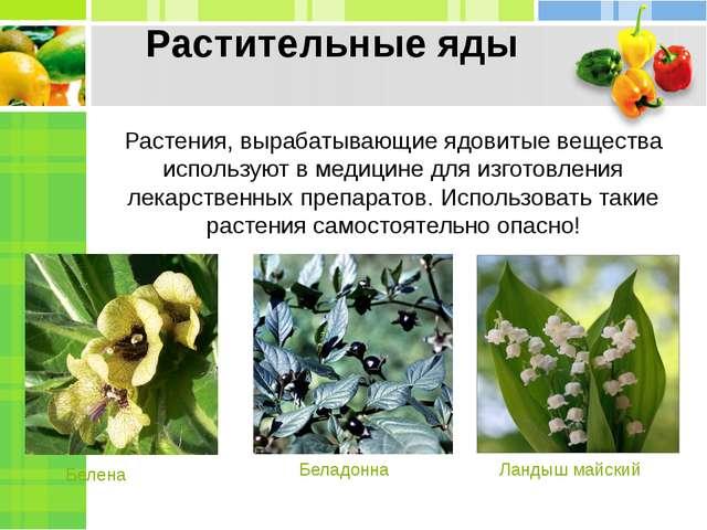Растительные яды Растения, вырабатывающие ядовитые вещества используют в меди...