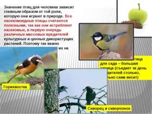 Значение птиц для человека зависит главным образом от той роли, которую они и