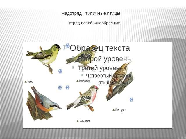 Надотряд типичные птицы отряд воробьинообразные