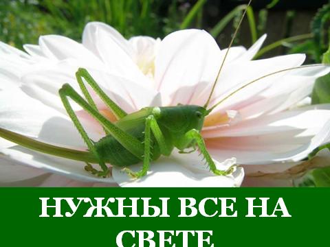 hello_html_6e9442a5.png
