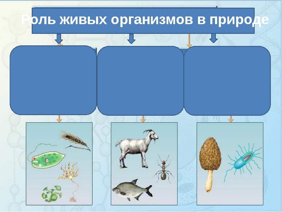 Роль живых организмов в природе