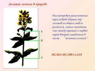 Рассматривая расположение трех подряд идущих пар листьев на общем стебле раст