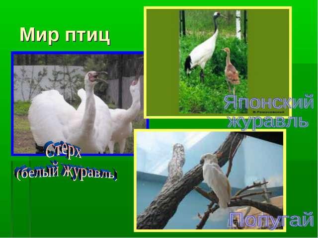 Мир птиц
