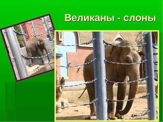 Великаны - слоны