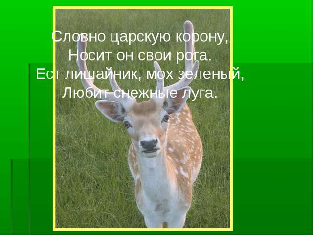 Словно царскую корону, Носит он свои рога. Ест лишайник, мох зеленый, Любит с...