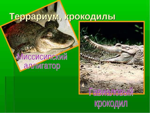 Террариум, крокодилы