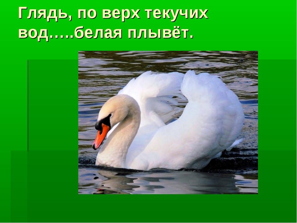 Глядь, по верх текучих вод…..белая плывёт.