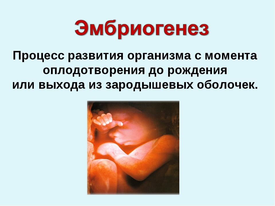 Процесс развития организма с момента оплодотворения до рождения или выхода из...