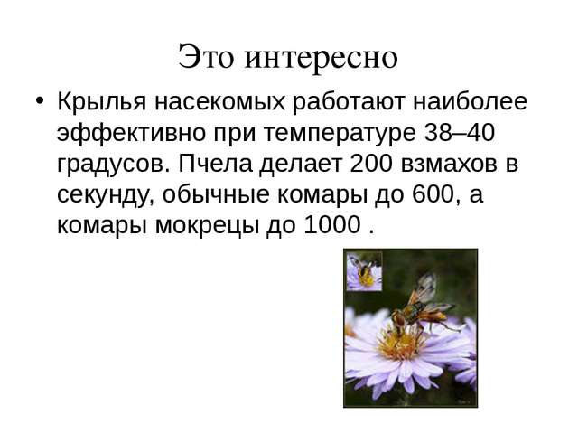 Это интересно Крылья насекомых работают наиболее эффективно при температуре 3...