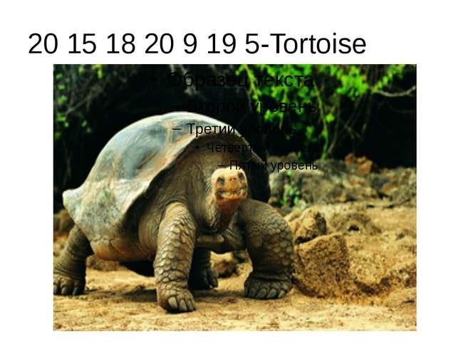 20 15 18 20 9 19 5-Tortoise