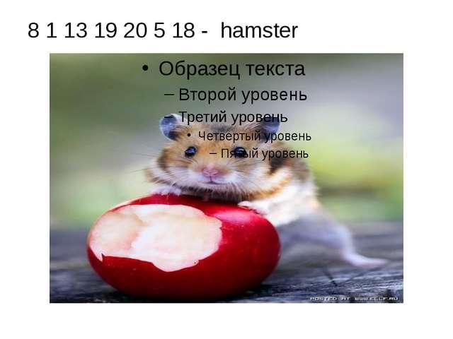 8 1 13 19 20 5 18 - hamster