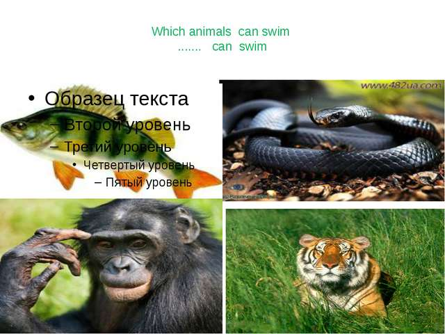 Which animals can swim ....... can swim