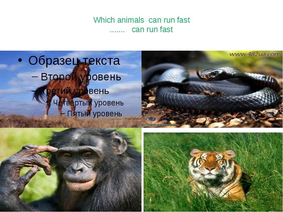 Which animals can run fast ....... can run fast