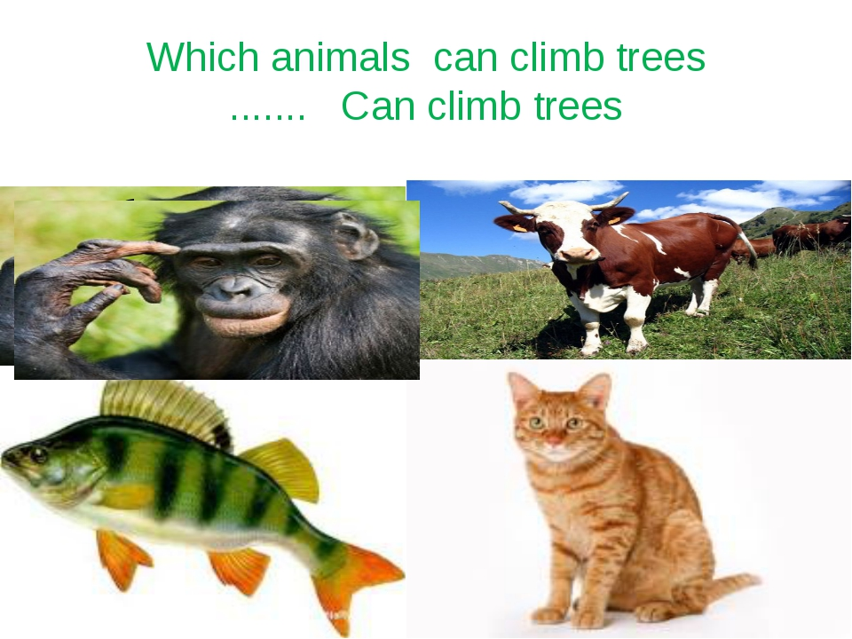 Which animals can climb trees ....... Can climb trees
