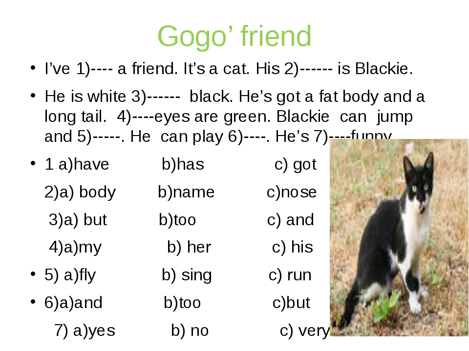 Gogo' friend I've 1)---- a friend. It's a cat. His 2)------ is Blackie. He is...