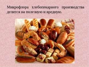 Микрофлора хлебопекарного производства делится на полезную и вредную.