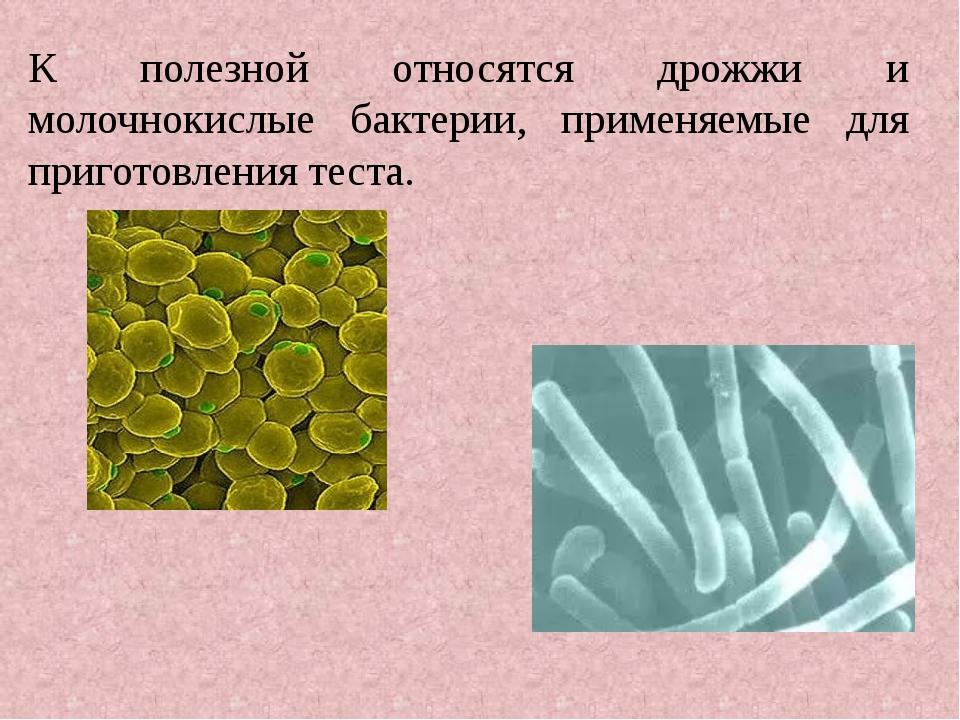 К полезной относятся дрожжи и молочнокислые бактерии, применяемые для пригото...