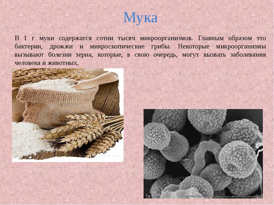 Мука В 1 г муки содержатся сотни тысяч микроорганизмов. Главным образом это б...