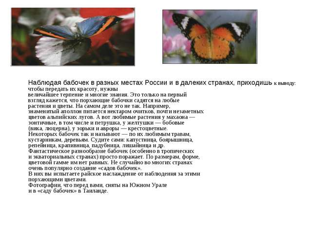 Наблюдая бабочек в разных местах России и в далеких странах, приходишь к выво...