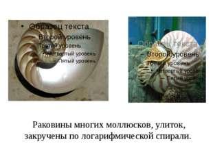 Раковины многих моллюсков, улиток, закручены по логарифмической спирали.