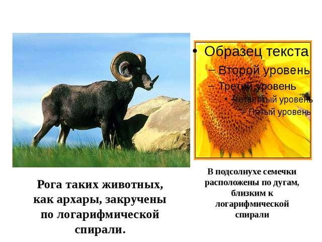 Рога таких животных, как архары, закручены по логарифмической спирали. В под...