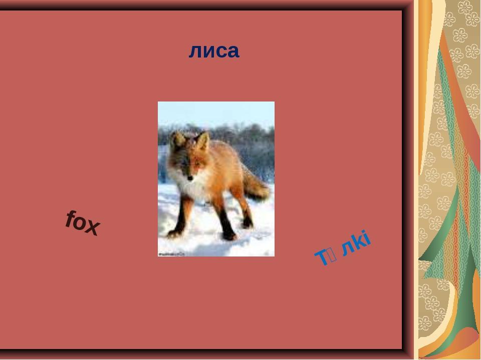 лиса fox Tүлki