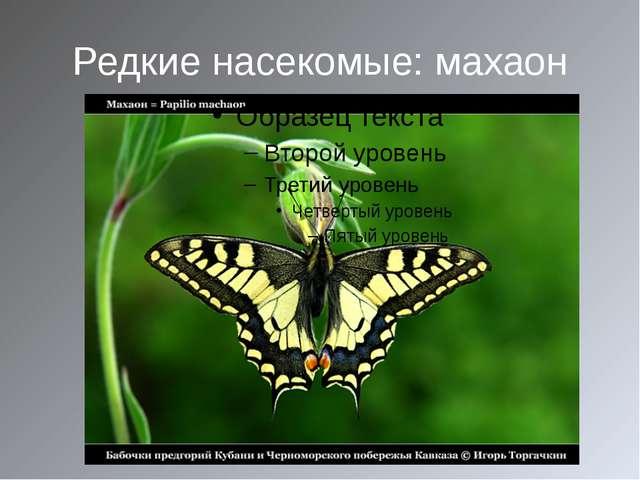 Редкие насекомые: махаон