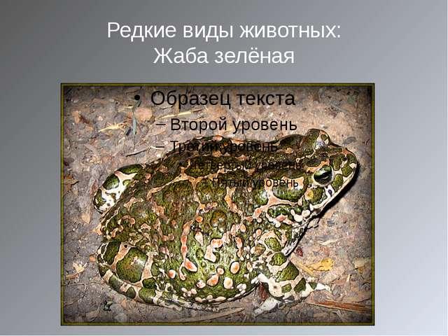 Редкие виды животных: Жаба зелёная