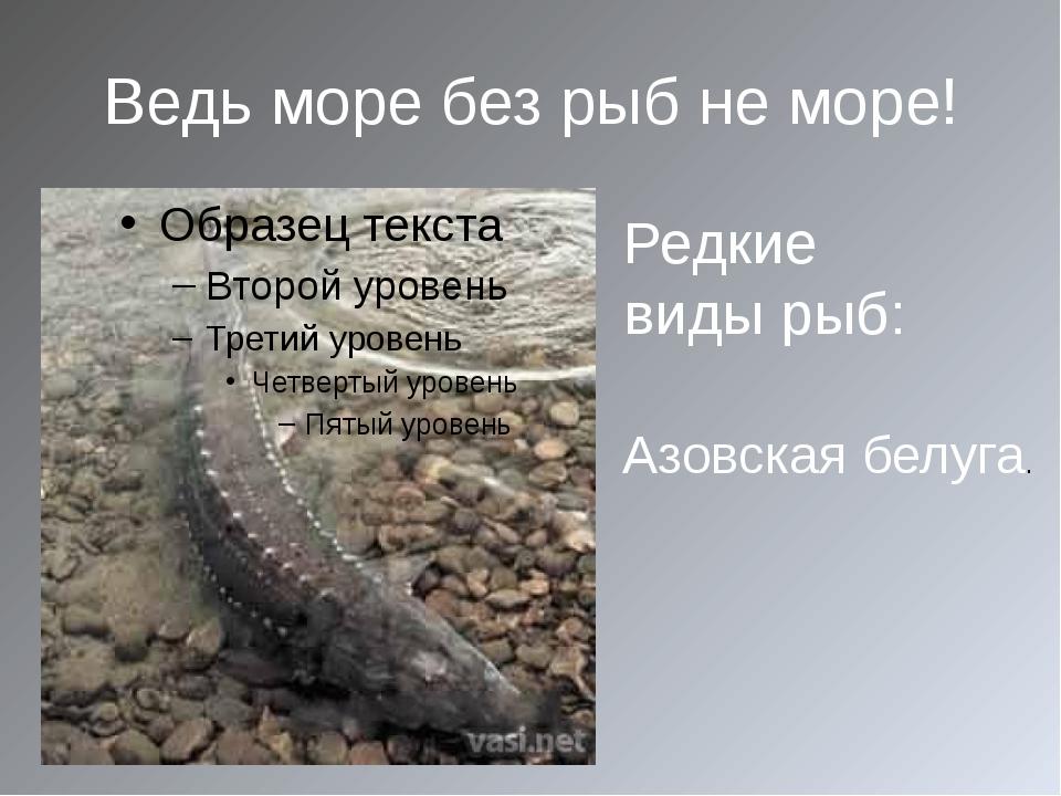 Ведь море без рыб не море! Азовская белуга. Редкие виды рыб: