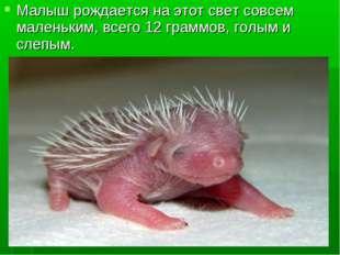 Малыш рождается на этот свет совсем маленьким, всего 12 граммов, голым и слеп
