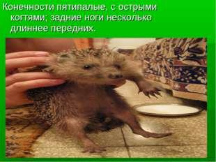 Конечности пятипалые, с острыми когтями; задние ноги несколько длиннее передн