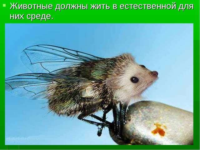 Животные должны жить в естественной для них среде.