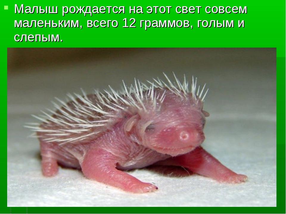 Малыш рождается на этот свет совсем маленьким, всего 12 граммов, голым и слеп...