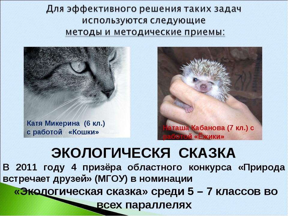 ЭКОЛОГИЧЕСКЯ СКАЗКА В 2011 году 4 призёра областного конкурса «Природа встреч...