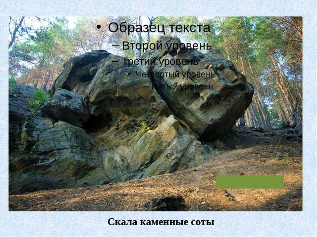 Скала каменные соты