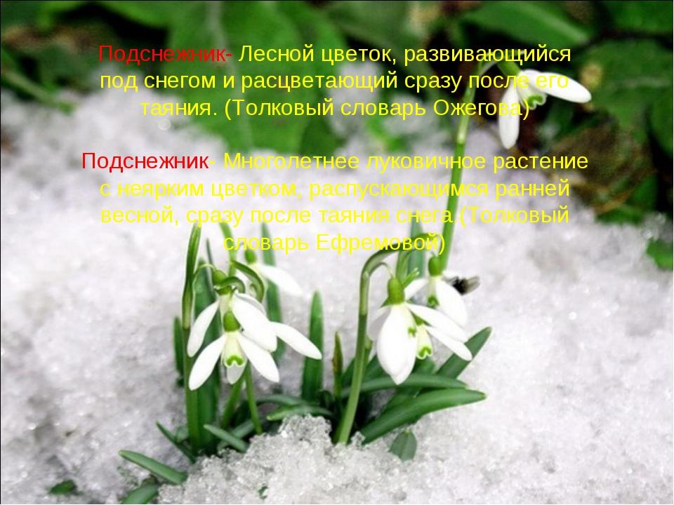 Подснежник- Лесной цветок, развивающийся под снегом и расцветающий сразу посл...