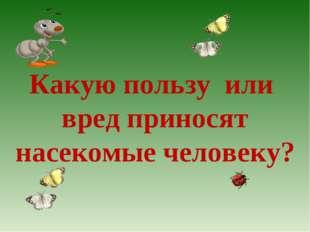 Какую пользу или вред приносят насекомые человеку?