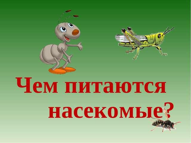 Чем питаются насекомые?